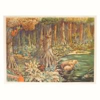 Affiche scolaire La forêt vierge - La toundra